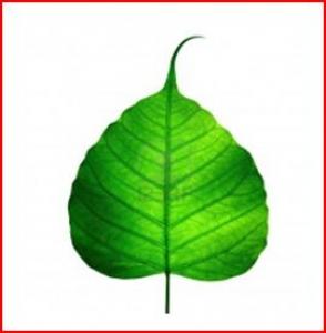 ASIA PLANT RENTAL- Indoor Plant Rental & Plant maintenance Services